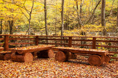Autumn Leaves On Wooden Benches Royalty Free Stock Image