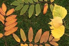 Autumn Leaves op Groene Achtergrond royalty-vrije stock foto's