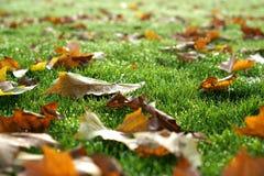Autumn Leaves op Met dauw bedekt Gras, Selectieve Nadruk royalty-vrije stock foto