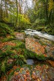 Autumn Leaves op Rotsen, Golitha-Dalingen, Cornwall stock foto