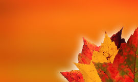 Autumn leaves orange background Stock Image