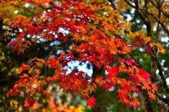 Autumn Leaves orange graderingsidor royaltyfri fotografi