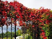 Autumn Leaves in Ost-Devon Stockfotos