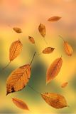 Autumn leaves on out of focus background Royalty Free Stock Photography