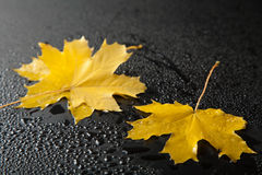 Autumn leaves over black Royalty Free Stock Images