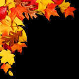 Autumn Leaves over Black Background with Copy Space Stock Photography