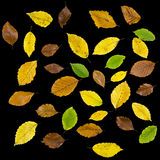 Autumn leaves over black background Royalty Free Stock Image