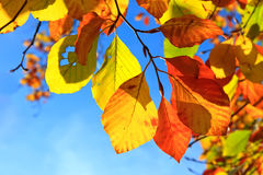 Autumn leaves over blue sky background Stock Image