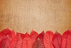 Autumn leaves over burlap background Royalty Free Stock Images