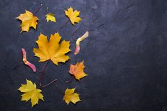 Autumn leaves over dark concrete background with copy space. Mockup for seasonal offers and holiday post card. Top view royalty free stock photos