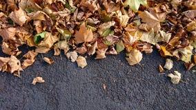 Autumn Leaves over een donkere grijze achtergrond royalty-vrije stock afbeeldingen