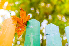 Autumn leaves over fence wooden background, soft focus, shallow depth of field Royalty Free Stock Image