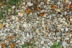 Autumn leaves over gravel Stock Images