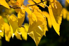 Autumn leaves over green background Royalty Free Stock Photos
