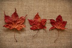 Autumn Leaves over jute background Stock Image