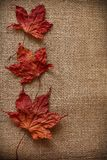 Autumn Leaves over jute background Stock Photo
