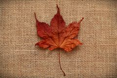 Autumn Leaves over jute background Royalty Free Stock Photography