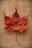 Autumn Leaves over jute background Royalty Free Stock Images