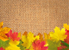 Autumn leaves over linen texture background Royalty Free Stock Images