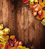 Autumn Leaves over a Natural Dark Royalty Free Stock Photo