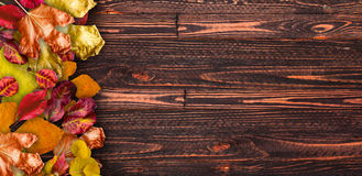 Autumn Leaves over a Natural Dark Royalty Free Stock Images