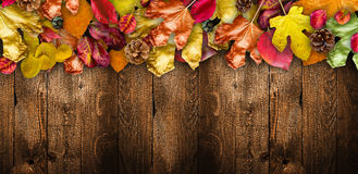 Autumn Leaves over a Natural Dark Stock Photo