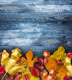 Autumn Leaves over a Natural Dark Wooden background. Stock Photos