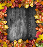Autumn Leaves over a Natural Dark Wooden background. Royalty Free Stock Image