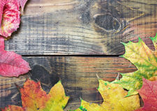 Autumn leaves over old wooden Royalty Free Stock Photo