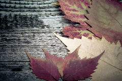 Autumn Leaves over old wooden background Stock Photography