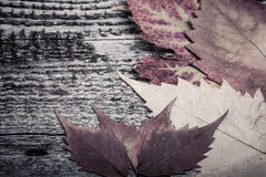 Autumn Leaves over old wooden background Stock Photo