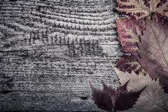 Autumn Leaves over old wooden background Royalty Free Stock Photos