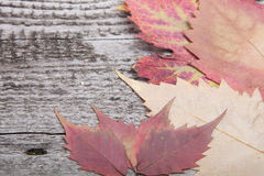 Autumn Leaves over old wooden background Royalty Free Stock Images