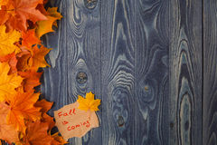 Autumn leaves over old wooden background. With copy space Royalty Free Stock Image