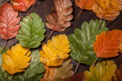 Autumn Leaves over old wooden background. Vintage autumn fallen leaves on the old wooden table Stock Photos