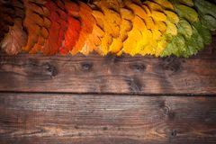 Autumn Leaves over old wooden background. Vintage autumn fallen leaves on the old wooden table. Copy space Stock Image