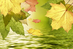 Autumn leaves over water Royalty Free Stock Photos