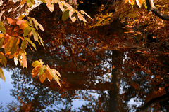 Autumn leaves over the water background leafs Stock Image