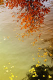 Autumn leaves over water Royalty Free Stock Images