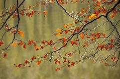 The autumn leaves over the water Stock Images