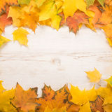 Autumn Leaves over white background Stock Photo