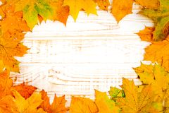 Autumn leaves over white wooden background. Royalty Free Stock Photos