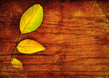 Autumn leaves over wood Stock Photography