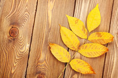 Autumn leaves over wood background Stock Photography
