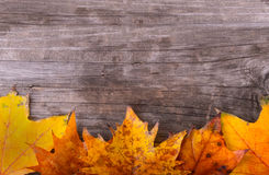 Autumn Leaves over wood. En background Royalty Free Stock Images