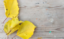 Autumn leaves over wood Stock Images