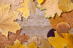 Autumn leaves over wooden background Royalty Free Stock Images