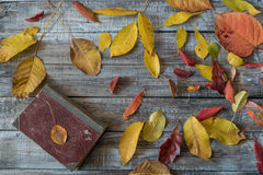 Autumn leaves over wooden background. Royalty Free Stock Images