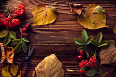 Autumn Leaves. Over wooden background.With copy space Royalty Free Stock Images