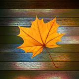 Autumn Leaves over wooden background. EPS10 Stock Images